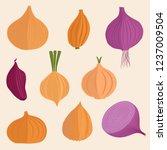 onion vegetable vector...