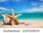 Seashells By The Sea. Beach...