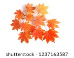 autumn maple leaves | Shutterstock . vector #1237163587