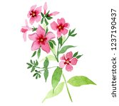 pink phlox flowers with green... | Shutterstock . vector #1237190437