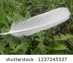 white feather of a bird. green... | Shutterstock . vector #1237245337