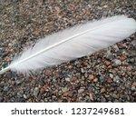 white feather of a bird.... | Shutterstock . vector #1237249681