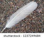 white feather of a bird.... | Shutterstock . vector #1237249684