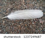 white feather of a bird.... | Shutterstock . vector #1237249687