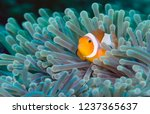 Underwater World Of Tropical...