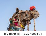 decorated head of a camel in... | Shutterstock . vector #1237383574