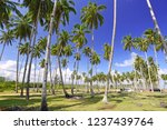 coconut trees on tropical beach | Shutterstock . vector #1237439764