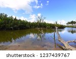 reflection of trees on tropical ... | Shutterstock . vector #1237439767