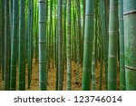 Bambu Forest In Kyoto  Japan