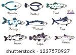 Stock vector types of fish hand drawn vector illustration sardine codfish mackerel herring halibut 1237570927