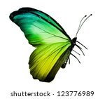 Stock photo green yellow butterfly isolated on white 123776989
