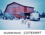 wild mountain farm   canning  ... | Shutterstock . vector #1237834897