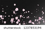 nice sakura blossom isolated...   Shutterstock .eps vector #1237853194