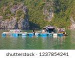 ha long bay  vietnam december... | Shutterstock . vector #1237854241