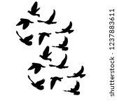 Isolated  Flock Of Flying Birds ...