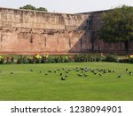 flock of pigeons on the well... | Shutterstock . vector #1238094901