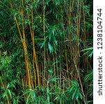 bamboo stalks in tropical forest   Shutterstock . vector #1238104744