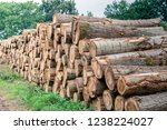 stacked thick tree trunks with... | Shutterstock . vector #1238224027