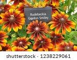 named variety of flowers   Shutterstock . vector #1238229061
