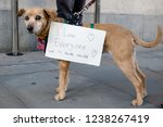London, United Kingdom, November 17th 2018:- A dog at the Stand Up To Racism march through central London from the BBC to near Downing Street in Whitehall - stock photo