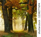 avenue of oak and ash in autumn ... | Shutterstock . vector #1238277694