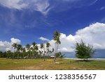 beautiful coconut trees on... | Shutterstock . vector #1238356567