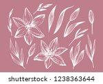 hand drawn lilies flowers... | Shutterstock .eps vector #1238363644