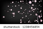 Nice Sakura Blossom Isolated Vector. Summer Flying 3d Petals Wedding Paper. Japanese Gradient Flowers Illustration. Valentine, Mother's Day Feminine Nice Sakura Blossom Isolated on Black