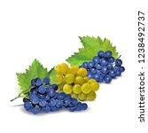 fresh  nutritious  tasty grapes.... | Shutterstock .eps vector #1238492737