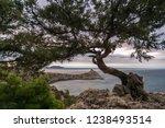 bonsai over the royal beach | Shutterstock . vector #1238493514