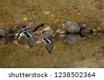 Mallard Ducks Flying Over Lake