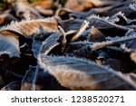 background of brown frozen... | Shutterstock . vector #1238520271