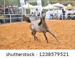 arabian horse at show | Shutterstock . vector #1238579521