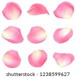 Stock photo set of rose petals 1238599627
