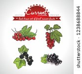 currant. hand drawn collection... | Shutterstock .eps vector #1238688844