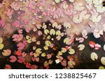 water lily in summer | Shutterstock . vector #1238825467