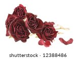 Bouquet Of Red Dried Roses...
