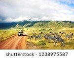Wild Nature Of Africa. Zebras...