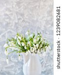 snowdrops spring background....   Shutterstock . vector #1239082681