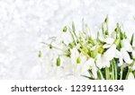 snowdrops spring background....   Shutterstock . vector #1239111634