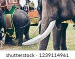 closeup of wonderful big strong ... | Shutterstock . vector #1239114961