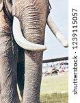 closeup of wonderful big strong ... | Shutterstock . vector #1239115057