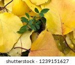 autumn and summer together | Shutterstock . vector #1239151627
