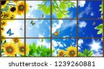 Sunflower Photo Collage With A...
