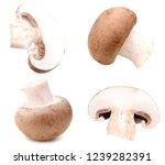 champignon mushroom in cut | Shutterstock . vector #1239282391