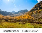 autumn landscape of the arkhyz... | Shutterstock . vector #1239310864
