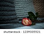 rose on a woolen blanket | Shutterstock . vector #1239335521