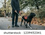 guide dog helping blind man in...   Shutterstock . vector #1239452341