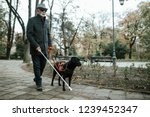 guide dog helping blind man in... | Shutterstock . vector #1239452347