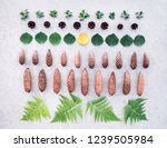 summer forest leaves and cones... | Shutterstock . vector #1239505984
